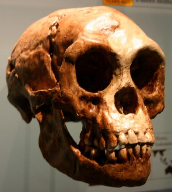 "Homo floresiensis (the ""Hobbit"") (Ryan Somma/Flickr/Creative commons)"