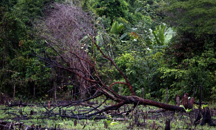 A burnt tree lies down on a road along the Amazon rainforest, in Pará State, northern Brazil, on Feb. 26, 2008. (Antonio Scorza/AFP/Getty Images)