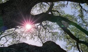 Popcorn and Inspiration: 'The Tree of Life': Putting Life's Problems in Perspective