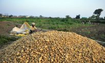 India's Agriculture on the Brink