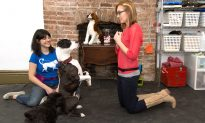 How to Train a Dog: Tips from NYC's Top Dog Trainers, part 1/6