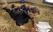 Gorilla Raised by Humans in Ohio (+Photos)