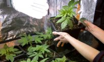 Legalize Pot Poll: Majority of Americans Support Legalization