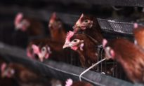 Fifth Person Dies From Bird Flu in China