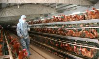 Chinese Vet Says Authorities Concealed H7N9 Poultry Epidemic