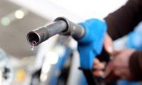 Bacteria Produce Pump-ready Fuel