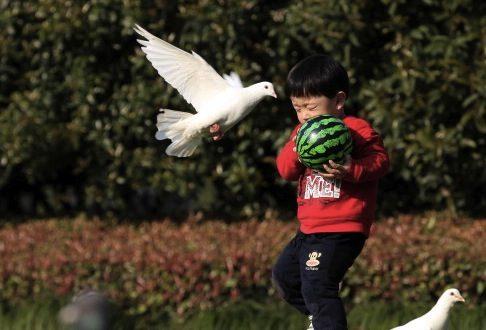 Chinese Boy Develops Bird Flu After Father