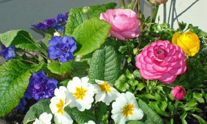 Springtime and Flowers Help Improve Mood