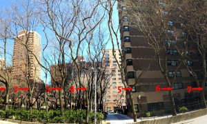 Seven Old Trees to be Cut for Micro-Apartment Building