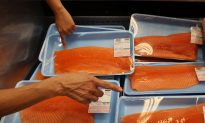 Superfish: FDA Reviews First GE Animal for Human Consumption
