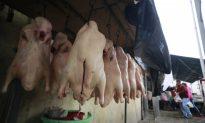 New Flu Strain in China Prompts Mass Killing of Pigeons