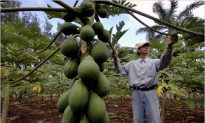 A Crash Course on GMOs