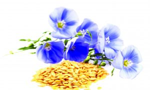 Bounce Back With Linseed