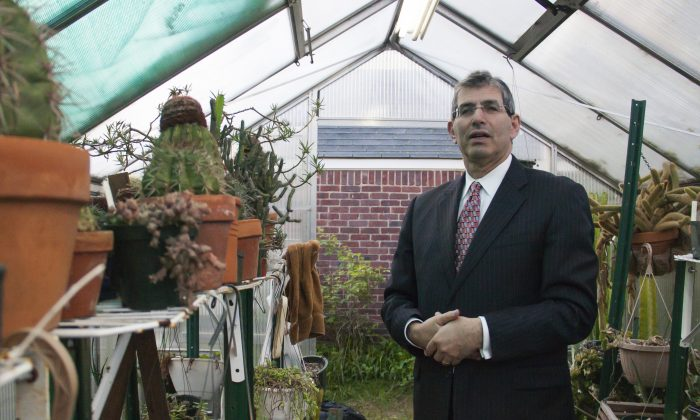 Norman Bobrow, president of Norman Bobrow and Company, stands amid cacti in one of his two greenhouses. Bobrow owns more than 2,000 cacti from different parts of the world. (Ivan Pentchoukov/Epoch Times)
