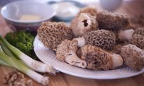 Wild Morels: A Delicacy Any Way They're Served