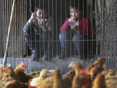 The H1N1 virus was recently discovered in Guangxi, where over 60 residents in the villages of Dingsan and Eshan had symptoms, and a 10-year-old boy died. The photo shows a bird market in China. (Getty Images)