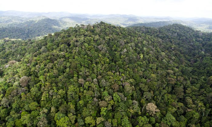 A view of the forest in French Guyana near Dorlin, on December 1, 2012.  (JODY AMIET/AFP/Getty Images)
