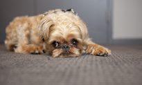 Puppy Mill Bill Passes NY State Legislature