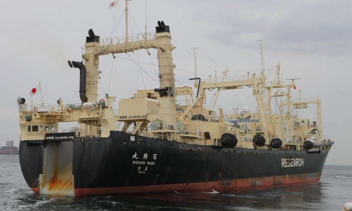 In this Friday, March 25, 2011 file photo, Japan's whaling ship Nisshin Maru leaves a port in Tokyo, for the water off Miyagi Prefecture. The battle over Japan's controversial whaling program is moving from the high seas to the United Nations' highest court. Australia opens its case Wednesday June 26, 2013 at the International Court of Justice, arguing that Japan's annual hunt in the icy waters around Antarctica is an illegal commercial activity outlawed since 1986 by an International Whaling Commission moratorium. (AP Photo/Itsuo Inuye)