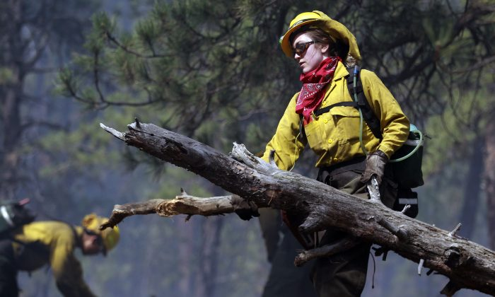 Samantha Marison, an AmeriCorps volunteer firefighter assigned to the El Paso County Sheriff's Office removes down wood fuel to help contain a spot fire in an evacuated area of forest, ranches and residences, in the Black Forest wildfire area, north of Colorado Springs, Colo., on Thursday, June 13, 2013. The blaze in the Black Forest is now the most destructive in Colorado history, surpassing last year's Waldo Canyon fire, which burned 347 homes, killed two people and led to $353 million in insurance claims. (AP Photo/Brennan Linsley)