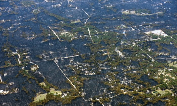 Blackened areas define the path of a wildfire that destroyed some homes and left others untouched in one neighborhood in the densely wooded Black Forest area northeast of Colorado Springs, Colo., Thursday, June 13, 2013.  More than 350 homes have been lost in what is now the most destructive wildfire in Colorado history, surpassing last year's Waldo Canyon fire, which burned 347 homes, killed two people and led to $353 million in insurance claims. (AP Photo/John Wark)