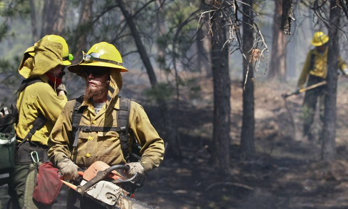 An AmeriCorps volunteer firefighter assigned to the El Paso County Sheriff's Office uses a chainsaw to break up and remove wood fuel to help contain a spot fire in an evacuated area of forest, ranches and residences, in the Black Forest wildfire area, north of Colorado Springs, Colo., on Thursday, June 13, 2013. The blaze in the Black Forest is now the most destructive in Colorado history, surpassing last year's Waldo Canyon fire, which burned 347 homes, killed two people and led to $353 million in insurance claims. (AP Photo/Brennan Linsley)