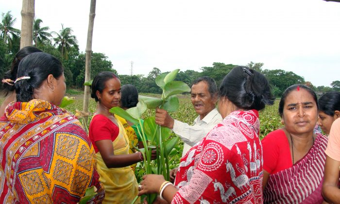 Women in Magra village located in West Bengal state of India, study Hyacinth plant. They are trained by an innovative enterprise Earth Craft to create lifestyle products out of the weed. (Courtesy of Earth Craft)