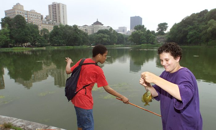 Thirteen year old Austin Dyer (R), and fourteen year old Kenneth Carter catch fish June 21, 2001 in the Harlem Meer, a lake in New York''s Central Park.  (Robert Mecea/Getty Images)
