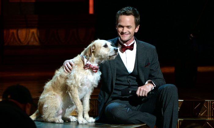 "Host Neil Patrick Harris onstage with the canine star of ""Annie"" at The 67th Annual Tony Awards at Radio City Music Hall in New York City on June 9, 2013. (Andrew H. Walker/Getty Images for Tony Awards Productions)"