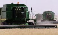 Oregon GM Wheat Contamination Could Have Ramifications for Canada