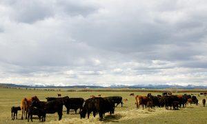 GMOs, A Global Debate: Canada Pushes for Flexibility