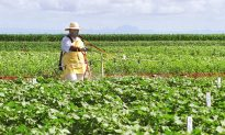 GMOs, A Global Debate: Brazil, Second Largest GMO Producer in World
