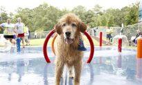 National Dog Day Focuses on Dog Health, Pet Adoption (+Photos)