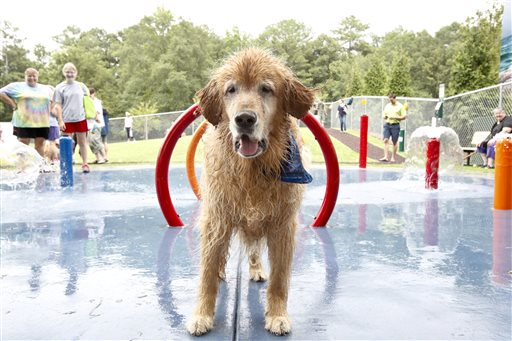 This July 12, 2012 photo released by Beneful shows a dog in the custom-designed splash pads in a $500,000 Beneful Dream Dog Park renovation that was unveiled last summer in Alabaster, Ala.   (AP Photo/Beneful)