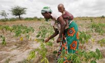 GMOs, A Global Debate: Kenya, Where GMOs Are Banned—For Now