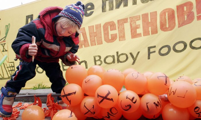 A little boy symbolically pops balloons with GMO (genetically modified organisms) inscriptions on them during a protest against the genetically modified additives in baby food in front of the Russian Health Ministry building in Moscow on June 1, 2006. (Mikhail Pochuev/AFP/Getty Images)