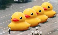 Rubber Duck to Live in Taiwan