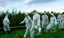 An Emergency Measure Against Monsanto Corn in Italy