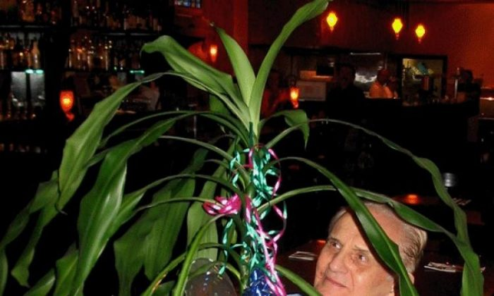 The Window to Primary Perception: Cleve Backster started his experiments with the plant Dracaena. (Courtesy of Cleve Backster)