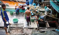 Pirate Fishing a Threat to the World's Fisheries