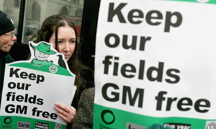 A woman from Friends of The Earth holds aloft a placard outside Parliament as part of a demonstration against GM crops in London England, Feb. 23, 2005. (Graeme Robertson/Getty Images)