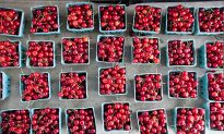 Cherries: The Ruby Fruit With Illustrious Beginnings