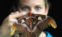 Moths Take the Limelight this Week