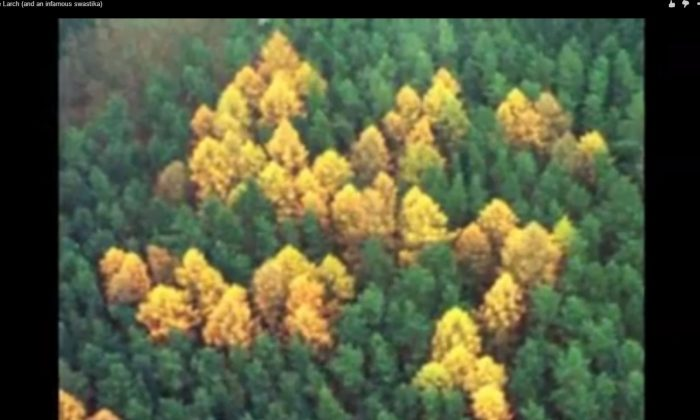A screenshot of YouTube shows the purported forest swastika.