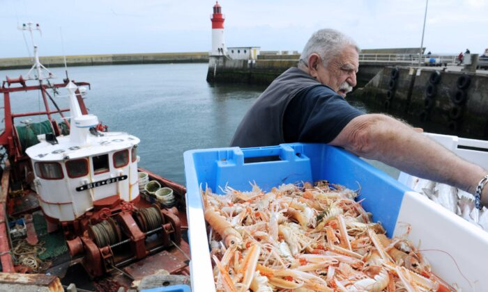 An employee unloads scampis from a boat at Le Guilvinec harbour, France, on May 30, 2012. (Fred Tanneau/AFP/Getty Images)