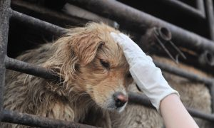 China: Dog Killer Poisons Self With Dart During Demonstration
