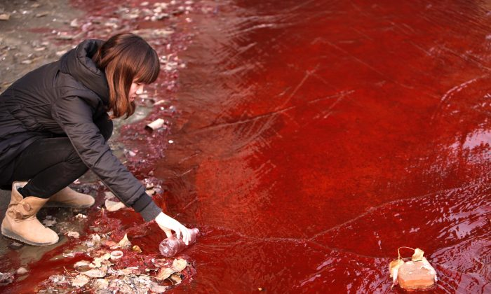 A woman collects a sample of the red polluted water flowing from a sewer into the Jian River in Luoyang, in central China's Henan Province, on Dec. 13, 2011. Pollution from a medicine factory in Daliuying Village in Henan Province creates a sour smell in the air, and makes underground water salty and unclear, state news media recently reported. (STR/AFP/Getty Images)