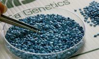 GMOs, A Global Debate: Israel a Center for Study, Kosher Concerns