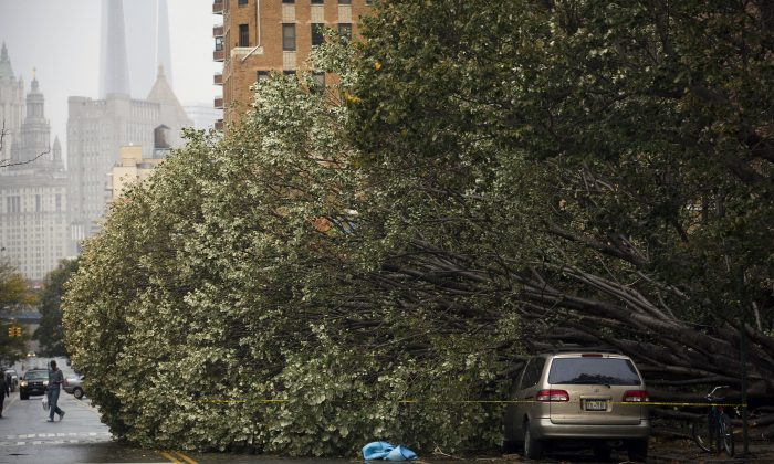 A fallen tree engulfs a vehicle on East Broadway in Lower Manhattan, in the aftermath of superstorm Sandy, in New York City, Oct. 30, 2012. (Louis Lanzano/AP Photo)
