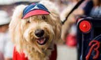 National Dog Day: Twitter Celebrates
